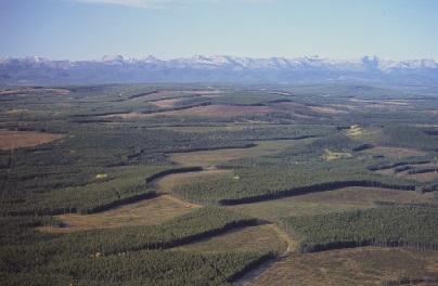 Aerial photograph of harvest blocks