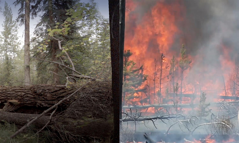 split image of burning forest