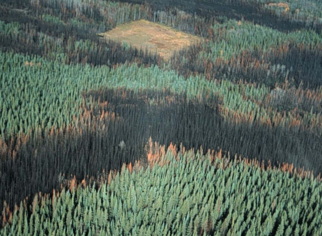 Aerial view of a burned forest by a harvest block