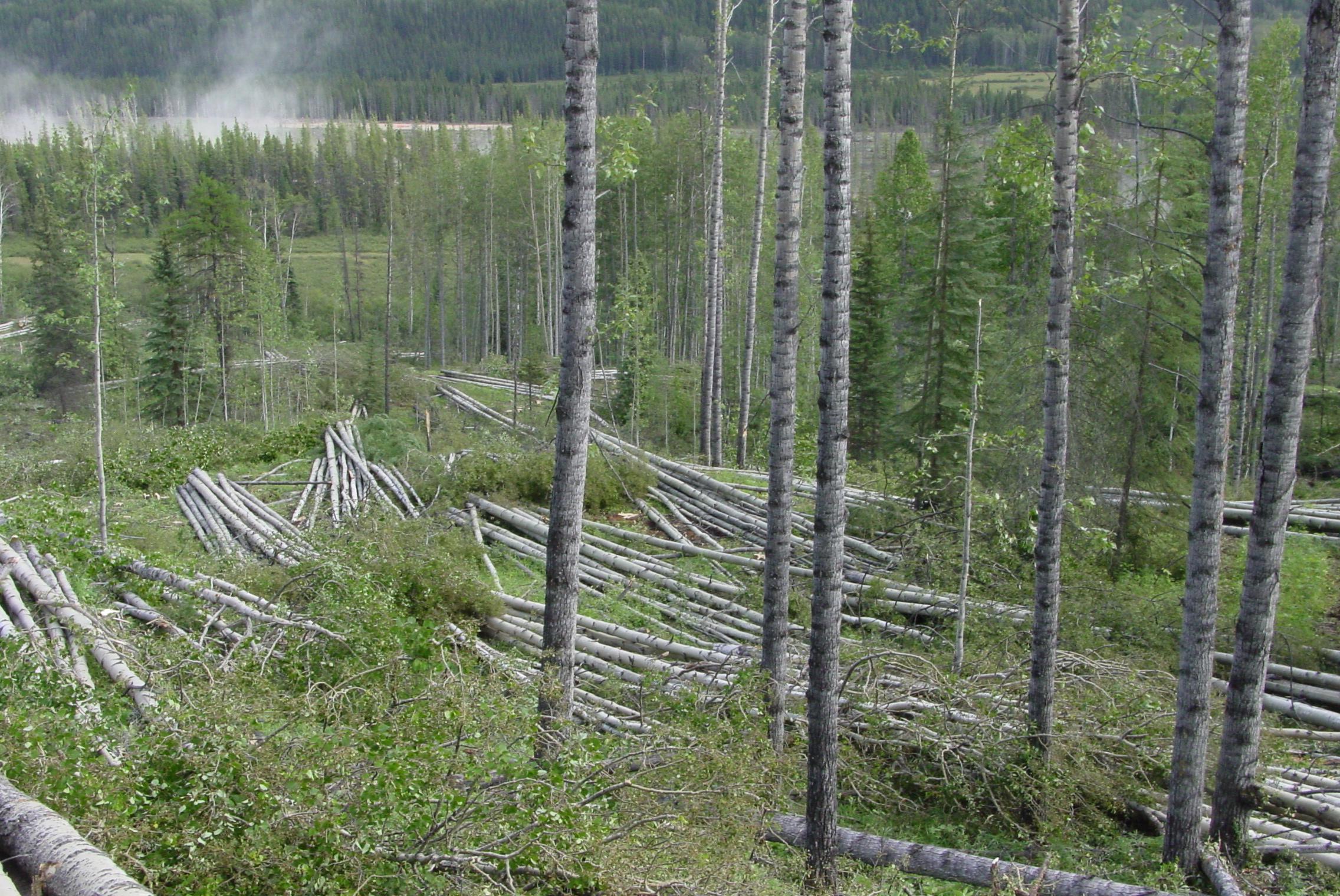 Aspen Mixedwood Biodiversity Project