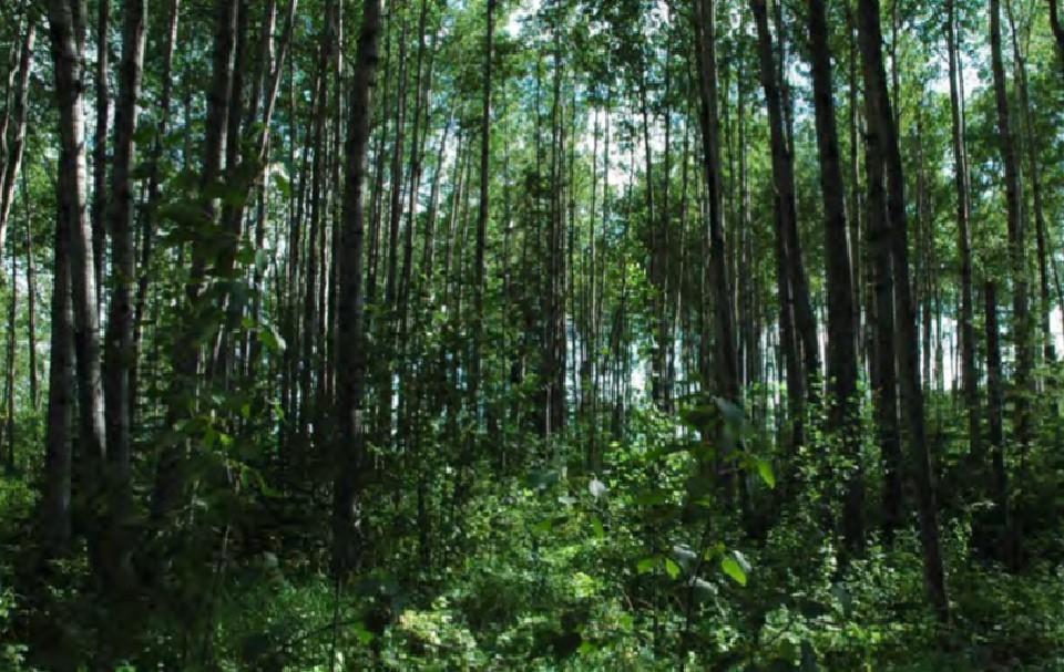 Dense forest undergrowth