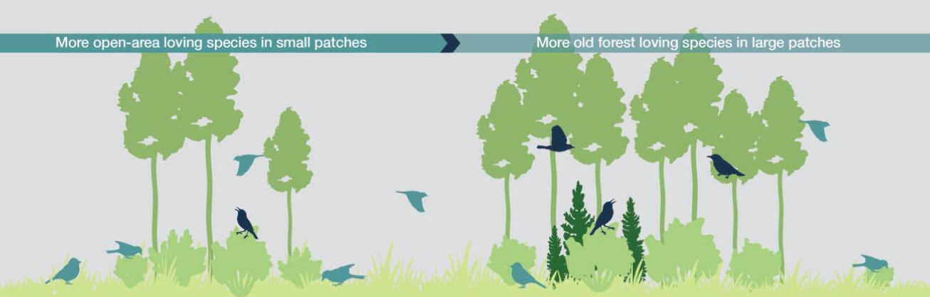 Schematic of forest birds selecting tree stands