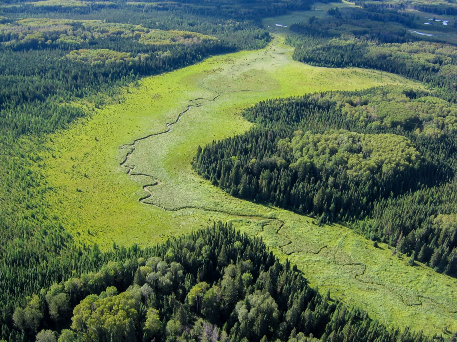 Aerial view of a creek running through a forest landscape