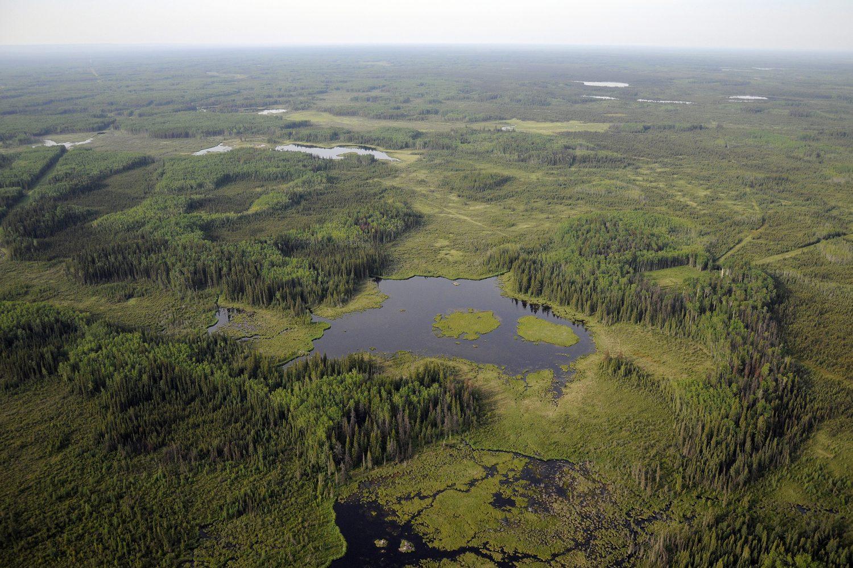 Boreal wetland complex