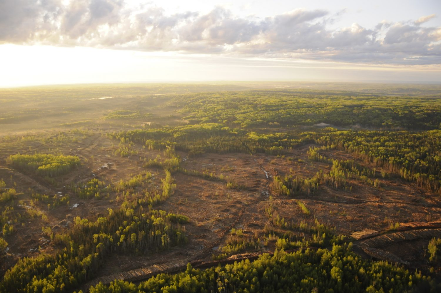 aerial photo of boreal forest