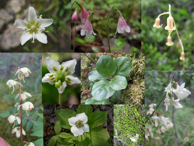A mosaic of woodland flowers