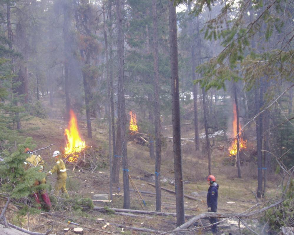 Prescribed burning in Jasper National Park