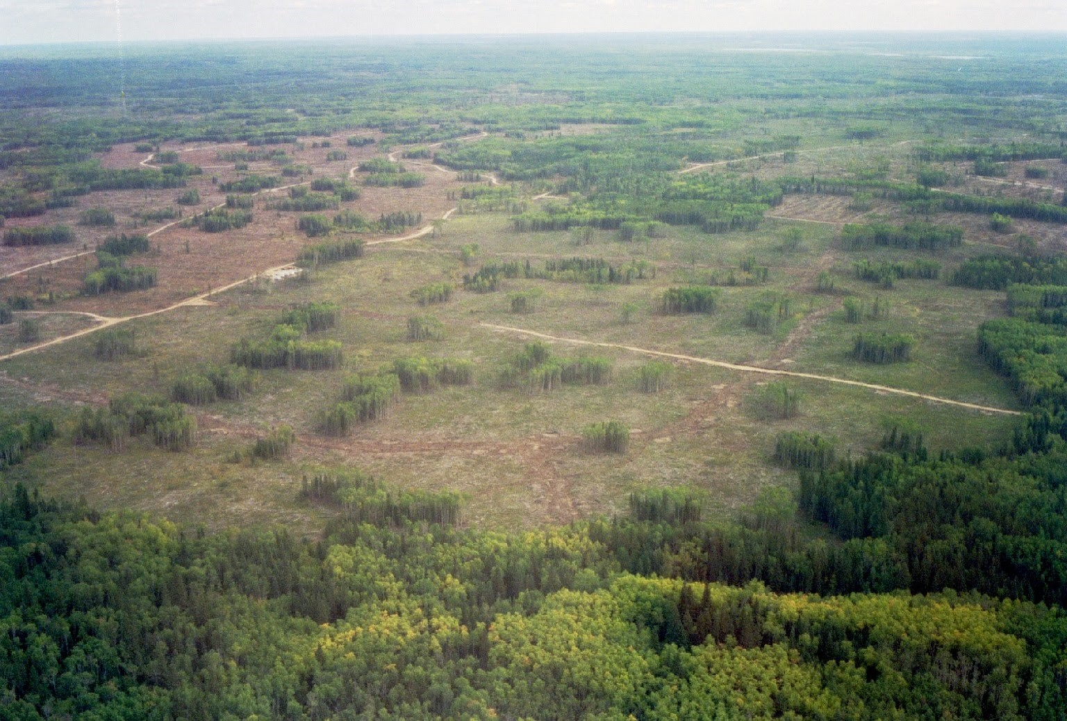 Aerial view of large harvest block with residual stands