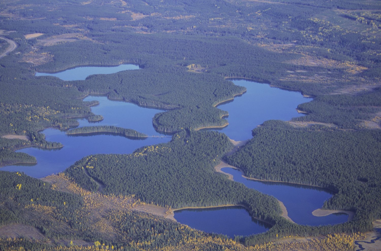 Aerial photo of lakes in a pine forest