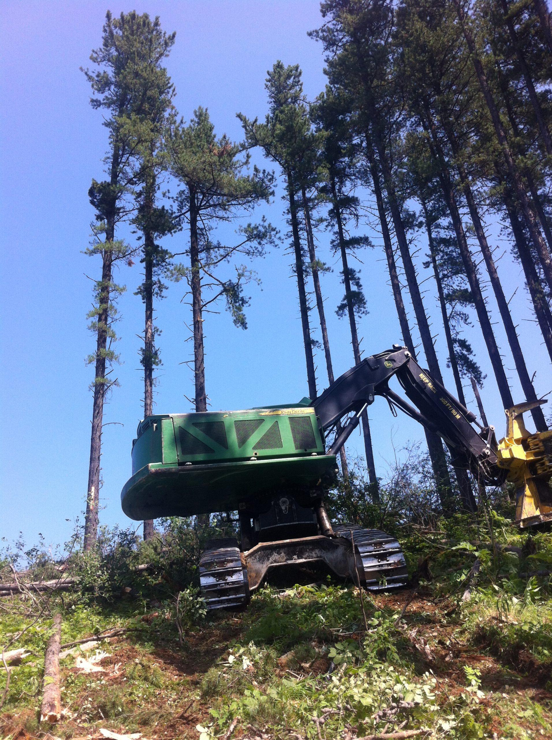 A large machine harvesting pine trees