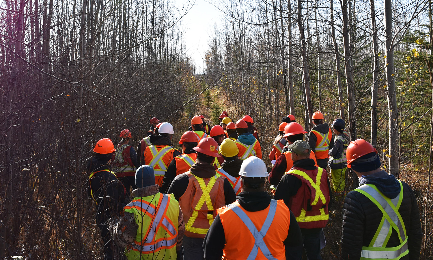 A group of workers in a forest